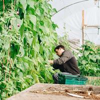 市民農園・農業体験農園はどこにある?
