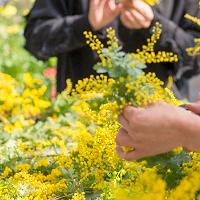 『世界らん展2019-花と緑の祭典-』|公式サイト