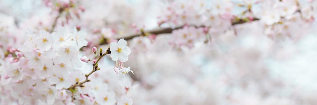 """""""新しいわたし""""に出逢う春"""