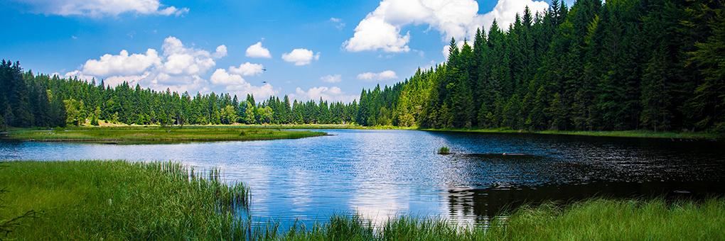 自然に触れる夏休み