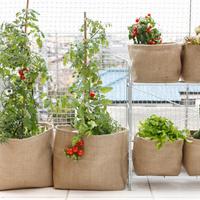 夏野菜を収穫!みんなの家庭菜園の様子を覗いてみたよ