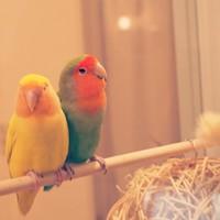 小鳥好きにはたまらない話題の隠れ家♪「ことりカフェ」で、ほっこり癒されよう