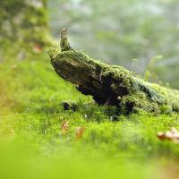 目の前に広がる神秘的な緑の絨毯。日本全国の苔がきれいな場所4選