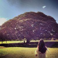 この木なんの木、気になる木♪に会える「モアナルア・ガーデンパーク」