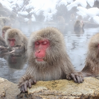いい湯だなぁ♪とっても幸せそうに温泉・露天風呂につかる動物たち
