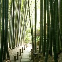 【金沢街道散策】歴史ある街道沿いで一味違う鎌倉観光を◎