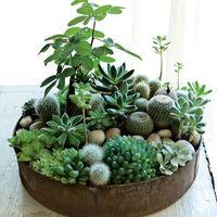 色んな種類の組み合わせが可愛い。多肉植物でミニ植物園を作ろう!