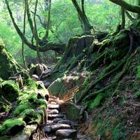 見ているだけでも癒される。一度は行ってみたい、『日本の美しい森』の風景3選