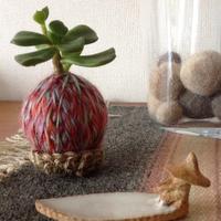 カラフルでコロンとしたフォルムが可愛いね。毛糸の苔玉の作り方をご紹介。