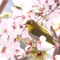 春のお楽しみ♪花をキレイに撮るための3つのコツを抑えよう!
