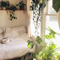 植物のある暮らしを☆初心者でも育てやすいおしゃれなグリーンまとめ