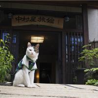 猫好きさんにはたまらない♡ニャンとも可愛い看板猫のいる温泉宿