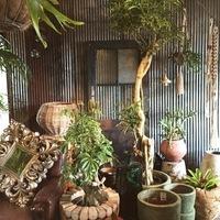 グリーンブームの今、滋賀県の個性的な花屋さん<花好mokume>が気になる!