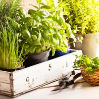 ベランダではじめませんか?食べられるハーブや野菜を育てる生活。