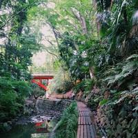 都会のオアシス。自然豊かな「等々力渓谷」でせせらぎ散歩&森林浴を