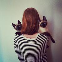 まるで写真集のよう。アネット・ぺルソンさんがクールに綴る2匹の猫との日常