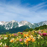 きっとまた行きたくなる。自然溢れる夏こそ訪れたい、長野県白馬村をご案内♪
