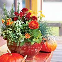 長く楽しめる植物をお探しですか?秋ガーデニングおすすめ植物