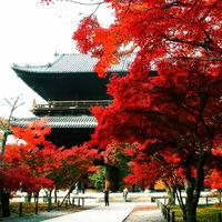 秋に訪れたい美しい京都~東山のおすすめ紅葉スポット5選~