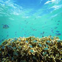 楽園のように美しい島「宮古島」のおすすめビーチ&シュノーケリングスポット