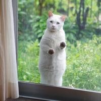 何度も何度も開きたくなる。可愛くてちょっぴり不思議な写真集「庭猫」