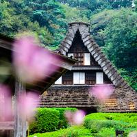 まるでタイムスリップしたみたい!「日本民家園」で感じる昔の日本