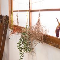 乾いていく様も美しい。手作りドライフラワーでお部屋を秋色に彩って