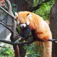 大人になっても楽しめる♪今こそ「上野動物園」を訪れてみませんか?