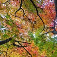「名古屋とばしなんてありえない!」羊毛フエルト作家「HONEY.CO」のYUKAさんの活動☆