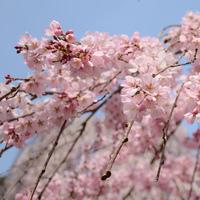 風情ある奈良で楽しむ、春の訪れ ~奈良県のお花見スポット5選~