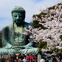 今年のお花見は鎌倉に行こう♪【鎌倉の桜の名所】をご紹介