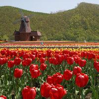 美しき大自然「北海道」。<春夏秋冬>おすすめの絶景観光スポット案内*