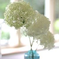 ふんわりまあるいフォルムが素敵。あじさい(紫陽花)をお家に飾ろう。