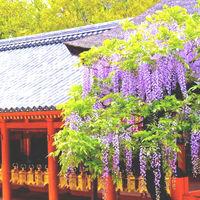 古都奈良を楽しむ旅!世界遺産「春日大社」とその周辺のおすすめスポット