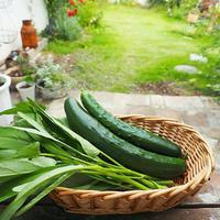 採れたてをパスタや煮物にサッと使いたい♪今から間に合う夏の野菜栽培