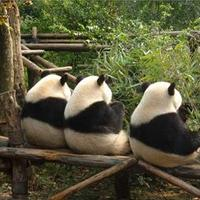"""きっとみんなトリコになる!可愛い""""パンダ""""と会える動物園へ出かけよう"""