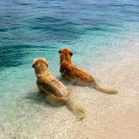 夏も元気に過ごして欲しいから♪愛犬の暑さ対策と夏のお出かけ