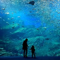 昼にはできない幻想的な体験を。ロマンチックな【夜の水族館】にご案内♪