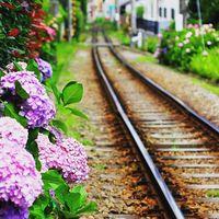 6月の雨の日は「鎌倉」へ出かけよう♪【長谷エリア】あじさい散歩