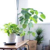 長く一緒にいたいから。観葉植物の育て方〈4つのコツ〉を知って、素敵なグリーンライフを