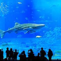 大人もたっぷり楽しめる!沖縄美ら海水族館&周辺観光で沖縄を堪能しよう