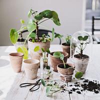 """等身大な""""グリーンのある暮らし""""。花と植物に囲まれた部屋作りのポイント"""