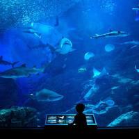 九州の「夜の水族館」に行ってみよう!【マリンワールド海の中道】【大分マリーンパレス水族館】