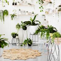 観葉植物にもお気に入りの場所があるよ♪部屋の場所別おすすめグリーンをご紹介