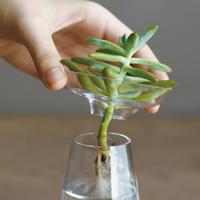 水耕栽培・基本のABC♪植物や野菜の根っこをみながら植物の美しい成長を見届けよう
