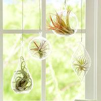 くるんと可愛い植物を飾ろう♪【エアープランツ】の育て方と飾り方