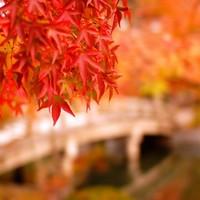 【お宿予約はお早めに!】 旨し麗し、今年も京都で紅葉散歩