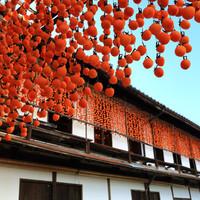 今だけの趣きある風景の中へ!「日本の秋の風物詩」をめぐる旅へ出かけませんか?