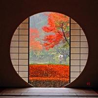 秋の鎌倉も美しい!名所から穴場まで、界隈の紅葉スポットと一息つけるカフェ案内