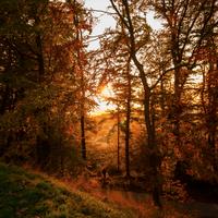 日本以外にもあるよ♪世界の美しい〈秋〉を探す旅に出かけてみませんか?【ヨーロッパ編】